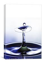 Dainty blue and white water drop, Canvas Print