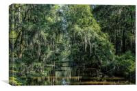 River at Phinizy Swamp Nature Park, Canvas Print