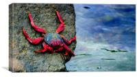 A Crabs Life. , Canvas Print