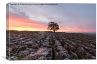 Under a Blood Red Sky, Malham Ash at Dawn, Canvas Print