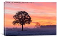 Phoenix Tree, Sunrise on the Vale of York (UK), Canvas Print