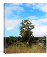 a single tree standing against an old stone wall , Canvas Print