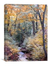 autumn woodland in beautiful seasonal colors with , Canvas Print
