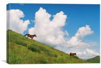 Horses, Canvas Print