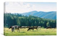 Cows 2, Canvas Print