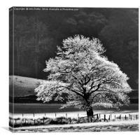 Oak Tree Hoar Frost, Canvas Print
