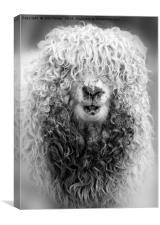 A Bad Hair Day!, Canvas Print