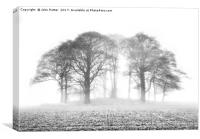 Beech Trees in Mist, Canvas Print