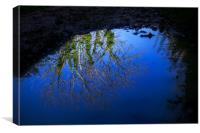 Tree branches, blue sky reflected in water puddle, Canvas Print