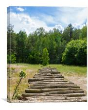 Pile of wooden logs in the sun, Canvas Print
