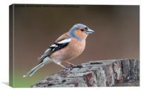British birds, Canvas Print