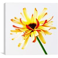 Yellow and Orange, Canvas Print
