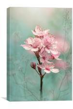 Black Cherry Plum Blossom, Canvas Print