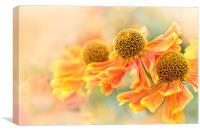 Orange helenium Flowers, Canvas Print