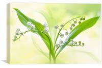 Spring white Lily of the valley flowers, Canvas Print