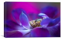 Purple Windflower, Canvas Print