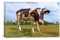 Funny cow looking at camera, Canvas Print