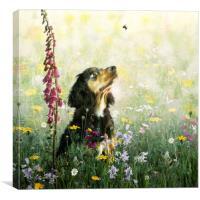 Spaniel in a Meadow, Canvas Print