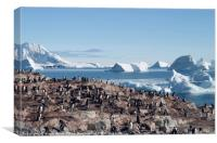 Penguins in the Antarctic, Canvas Print