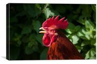 Red cockerel head shot., Canvas Print