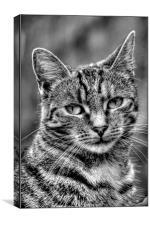 The Cat, Canvas Print