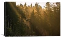 Sunbeams at Cragside, Canvas Print