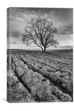Moody Lone Tree, Canvas Print