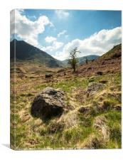 A Haweswater Tree, Canvas Print