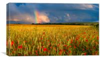 Rainbow over field of poppies at sunset, Canvas Print