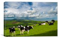 Cows in Dorset countryside overlooking Portland, Canvas Print