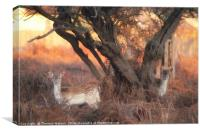 Bambi Watching , Canvas Print