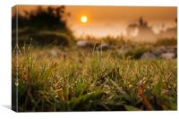 Sunrise on the field, Canvas Print