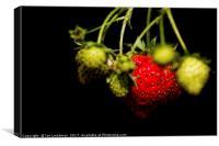 Garden strawberries bunch, Canvas Print