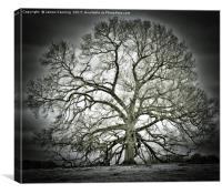 Halo Tree, Canvas Print