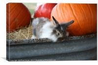 Bunny and Pumpkins, Canvas Print