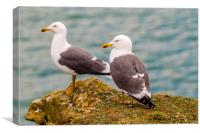 A Pair of Lesser Black Backed Gulls