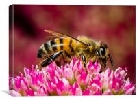 The Honey Bee at Work, Canvas Print