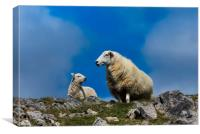 Sheep - Mother and Baby Lamb., Canvas Print