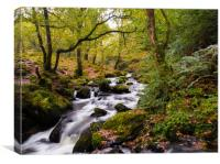 Dolgoch Falls in the Autumn., Canvas Print
