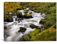 The River at Dolgoch Falls in the Autumn., Canvas Print