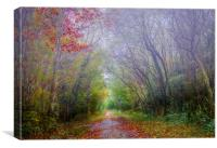 Autumn Mist in Slebech Wood in Pembrokeshire., Canvas Print