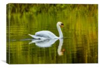 The Swan and Reflections at Bosherston Ponds., Canvas Print