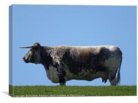 An udder cow, Canvas Print