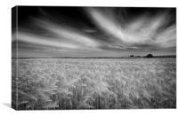 Corn field, Canvas Print