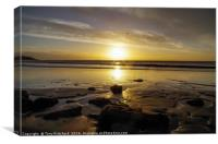 Lone Seagull at Whitmore Bay, Canvas Print