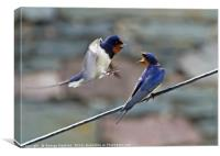Swallow on Swallow, Canvas Print