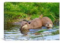 Freshwater Otters in Playful Mood, Canvas Print