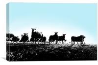 Yorkshire sheep, Canvas Print