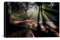 Rays of light at Penllergare woods., Canvas Print