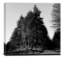 Black and White Forest, Canvas Print